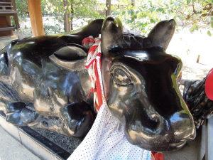 北野天満宮の牛。ひっさの合格祈願に。